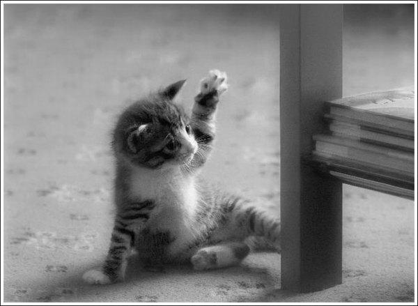 Kazhig, petit chat