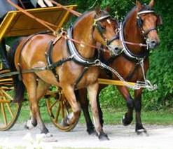 Les cavalcades, traditions mariage breton interdite en 1785.